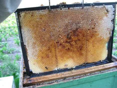 Krystalizacja miodu pszczelego