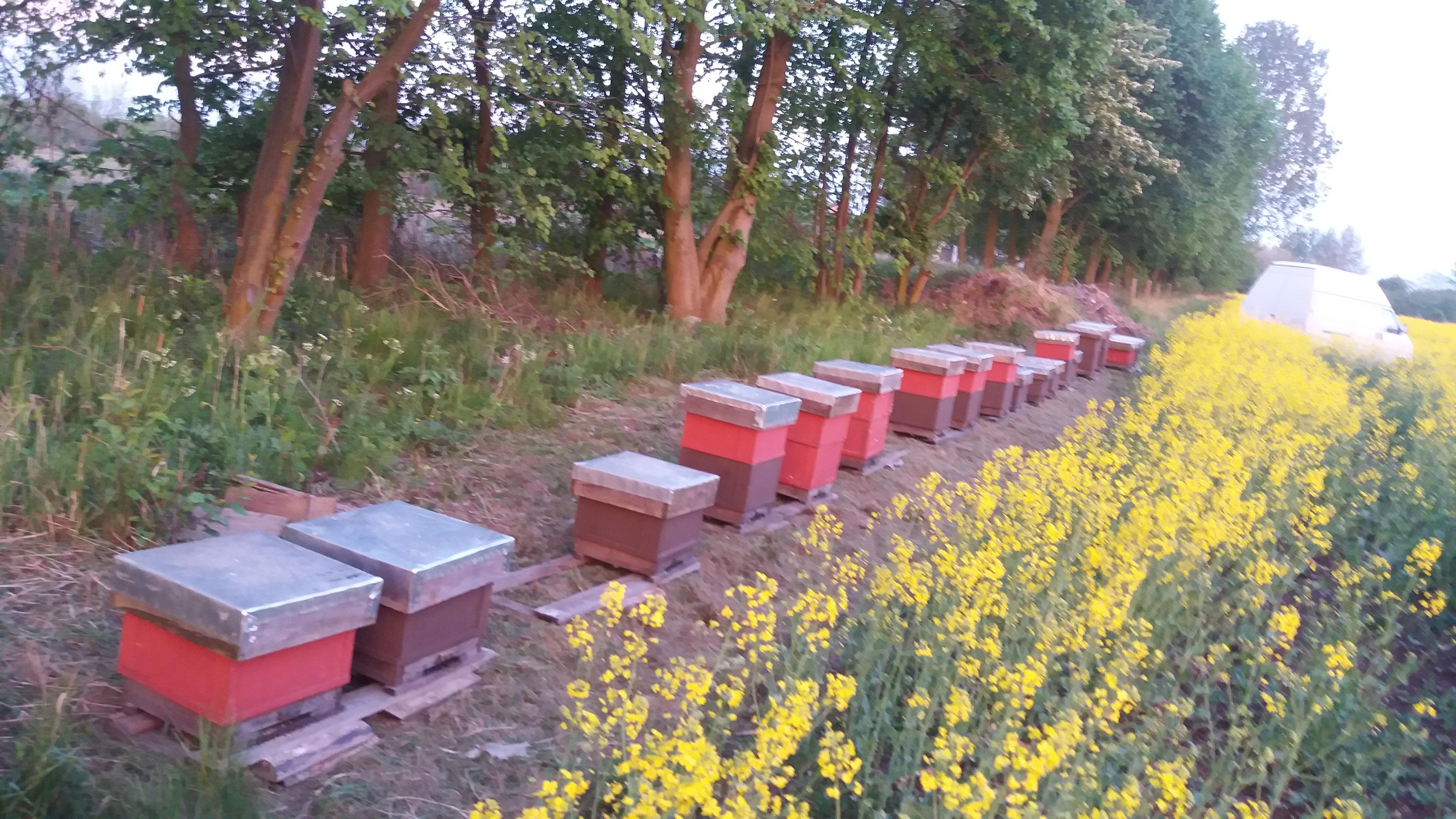 Jak pozyskuje się pyłek kwiatowy? Jak pszczoły go zbierają?