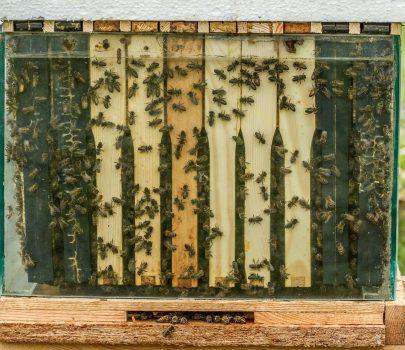 Czy wiesz, że pszczoły zapylają 84% wszystkich roślin?