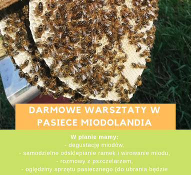 Darmowe warsztaty w Pasiece MIODOLANDIA! SIERPIEŃ 2019